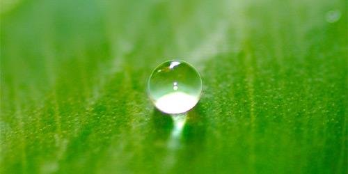 Spiritual-drop