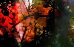 AutumnLight
