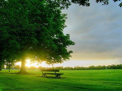 Morning-sun-in-park