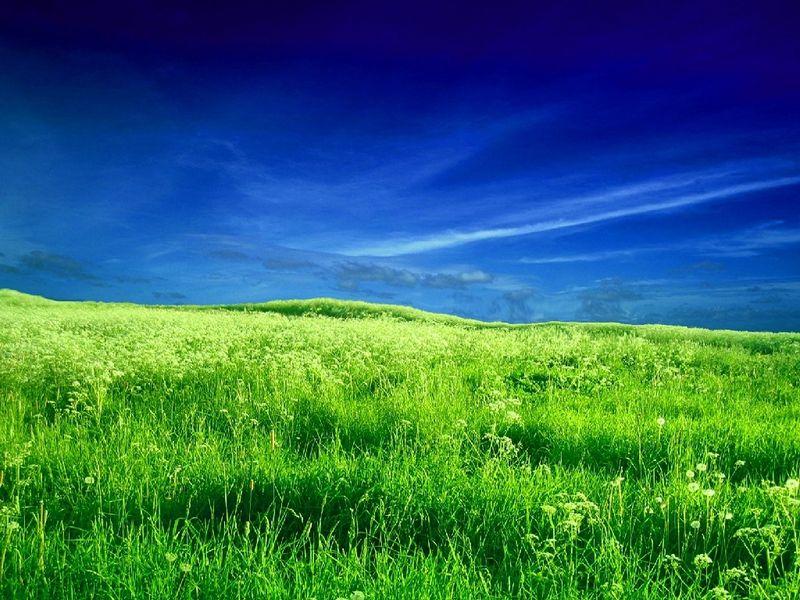 Zeeland-field-scenery-218
