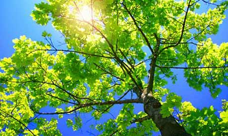 Sunlight_in_tree_460x276
